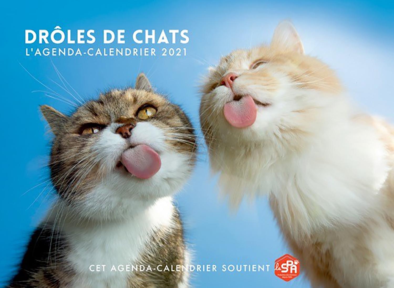 Droles De Chats L Agenda Calendrier 2021 Quebec Loisirs